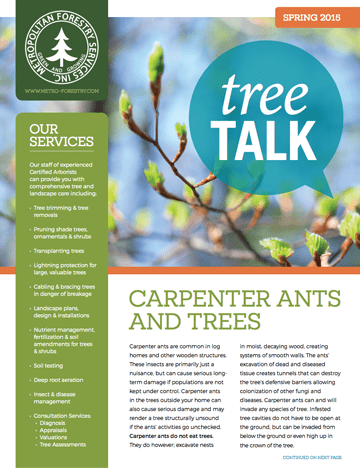 Thumbnail of the Spring 2015 Newsletter Issue